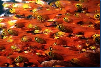 Fish Schools - sweeper