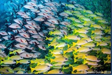 Fish Schools - two