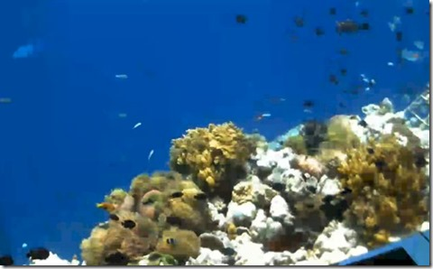 Anantara Kihavah underwater webcam