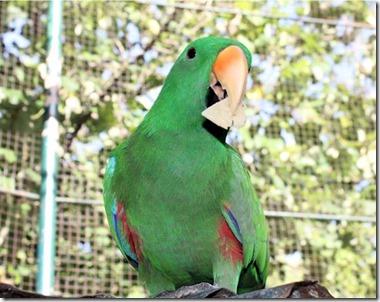 Chaaya Reef Ellaidhoo aviary parrot
