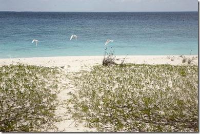 Coco Palm Dhuni Kholu desrt island 2