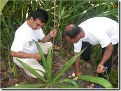 Coco Palm Dhuni Kholu tree planting