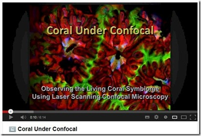 Coral Under Confocal