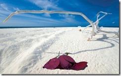 Dead rose on Maldives beach