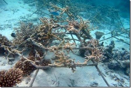 Four Seasons Landaa Giraavaru reefscapers frame LG0729