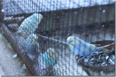 Gangehi bird cage
