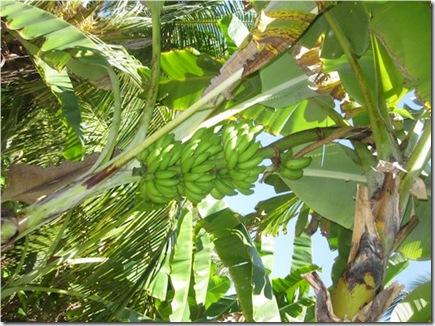 Hudhuranfushi Bananas