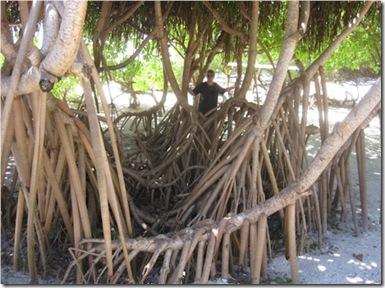 Hudhuranfushi Screw Pine