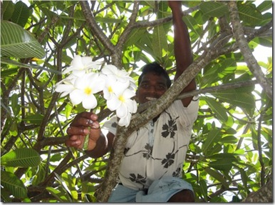 Hudhuranfushi Temple Flower Tree