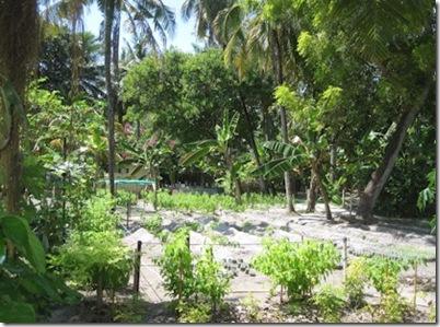 Hudhuranfushi garden