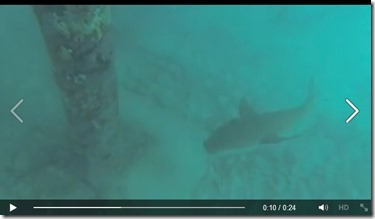 Huvfenfushi - nurse shark video