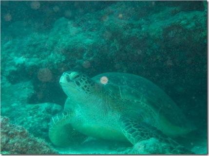 Kuredu Caves turtle