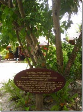 Kuredu tree signs 2