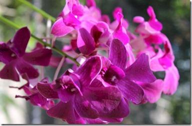 LUX Maldives orchid