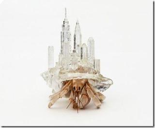 Maldives - not seen - 3D printed crab shells