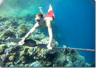 Maldives - not seen - subwinging