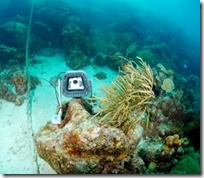 Maldives - underwater webcam
