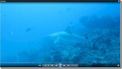 Maldives Shark - Sun Siyam Irufushi