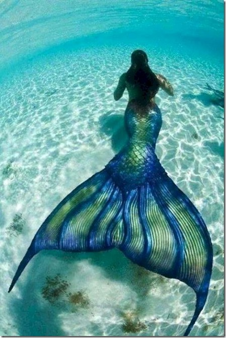 Maldives mermaid