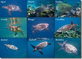 Maldives turtle tracking project