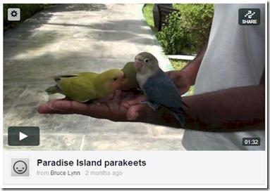 Paradise Island - parakeets video