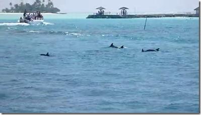 Rihiveli Beach dolphins