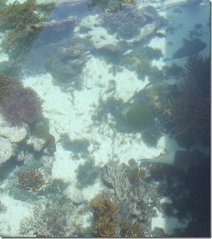 Royal Island - fish pool 2