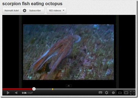 Scorpion Fish attacks Octopus