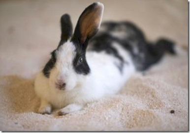 Soneva Fushi bunny