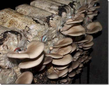 Soneva Fushi mushrooms