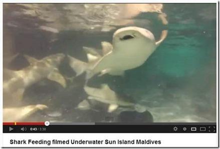 Sun Island shark feeding