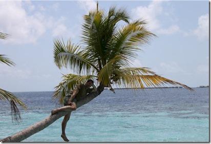 Vilamendhoo climbing tree