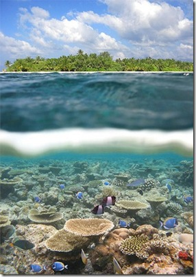 Vilamendhoo Reef