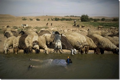 West Bank snorkeling