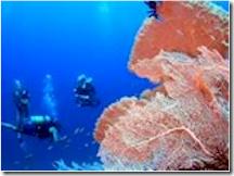 Kandolhu House Reef