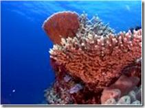 Kandoludhoo House Reef