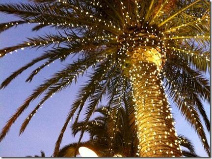 palm tree christmas lights 2