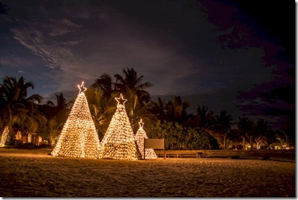 Anantara - coconut Christmas tree