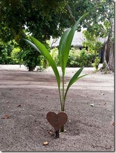 Sun Siyam Irufushi - tree planting 1