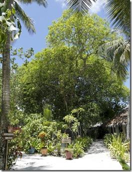 Nika - wish tree