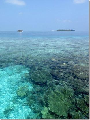 Secret paradise - reef