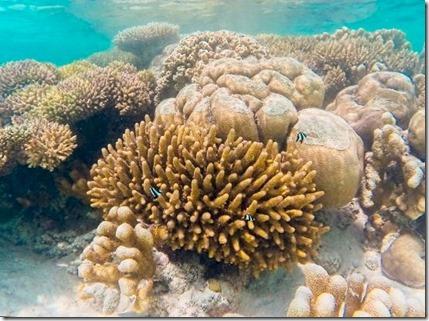 Canareef - snorkeling 2