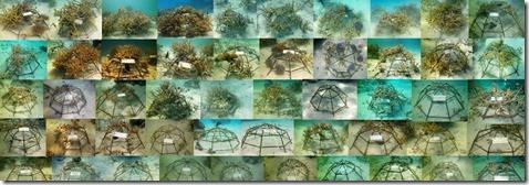 Taj Exotica - lagoon coral frames