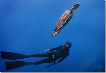 Anantara - PADI free diving