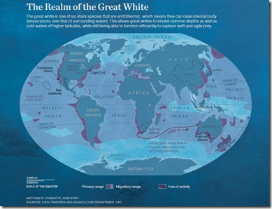 Realm of the Great White Shark