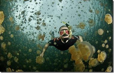 jellyfish snorkeling