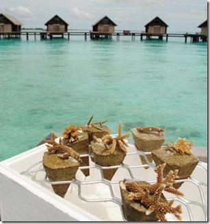 Shangri-La Villingili - reef scaping 1