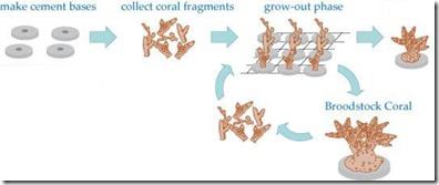 Shangri-La Villingili - reefscaping 2