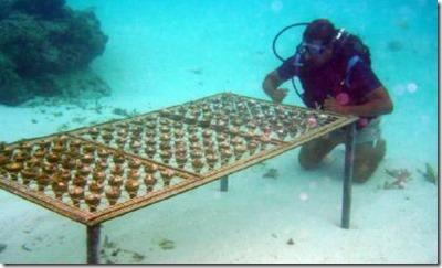Shangri-La Villingili - reefscaping 4