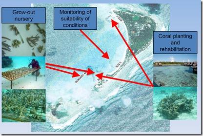 Shangri-La Villingili - reefscaping 8